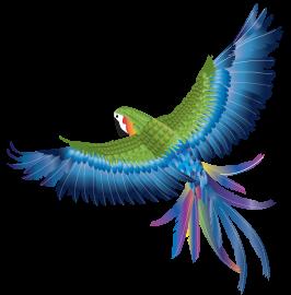 ailes-de-perroquet 6€